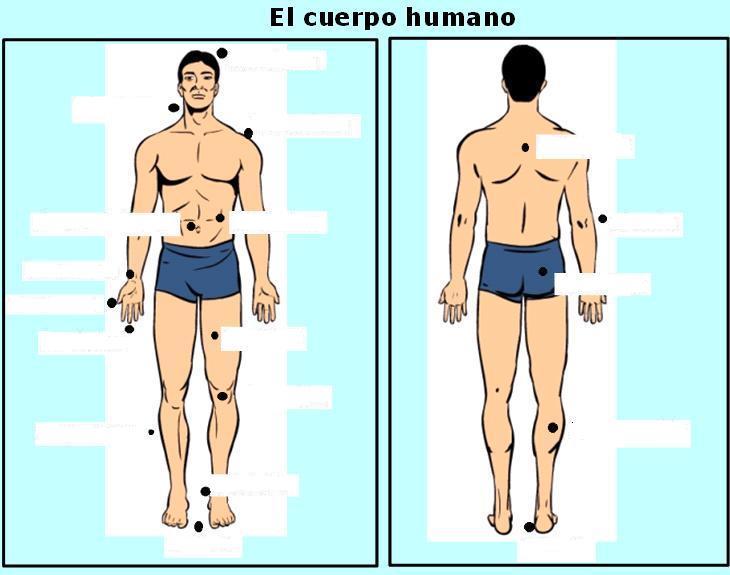 el cuerpo hfst 8 deel 2